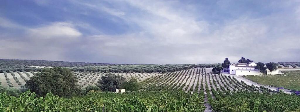 Los vinos de la eterna flor
